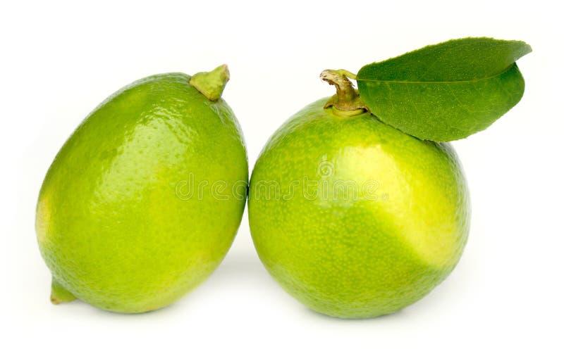 Limón verde con la hoja en el fondo blanco fotografía de archivo libre de regalías