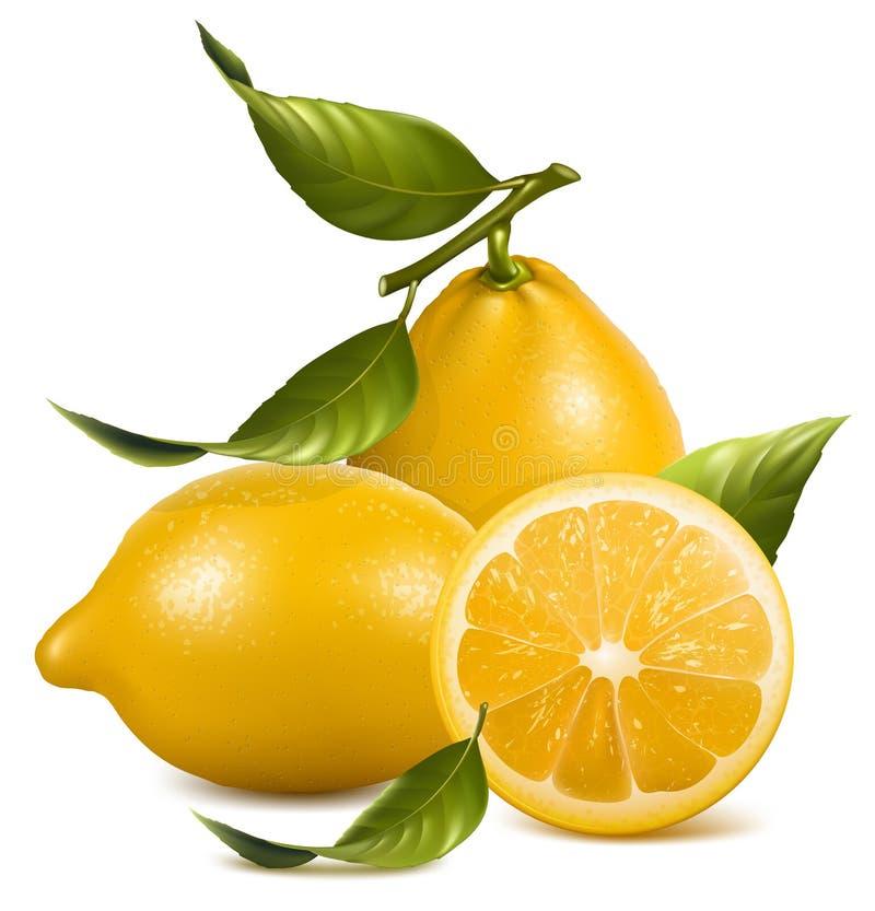 Limões ilustração stock