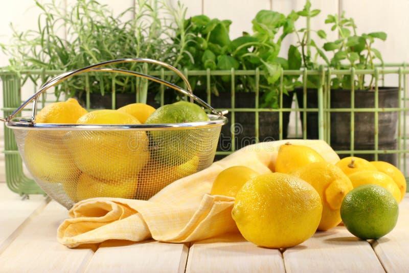 Limões e ervas fotos de stock