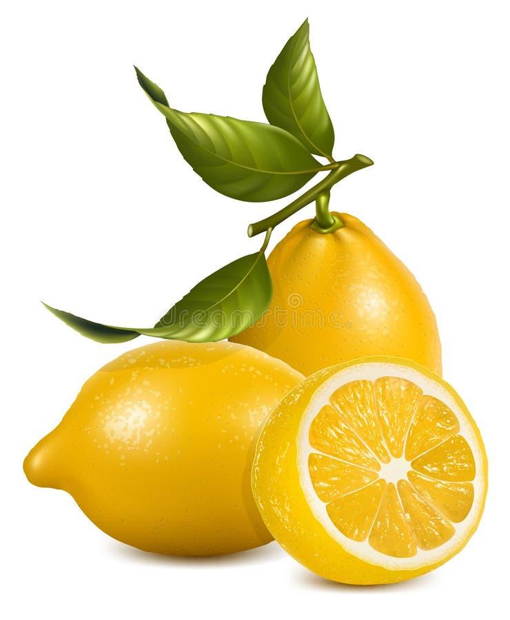 Limões frescos com folhas. ilustração stock