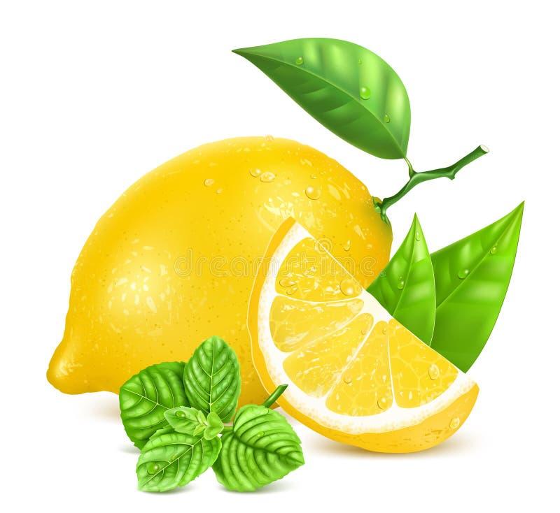 Limões frescos com folhas e hortelã ilustração stock