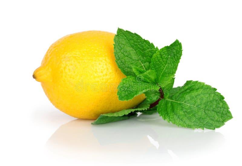 Limões frescos com a hortelã do verde da folha imagens de stock