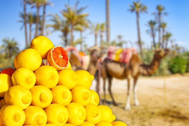 Limões grandes no mercado em C4marraquexe, Marrocos Frutos tropicais amarelos em África O fundo ? borr?o Há camelos e palmas foto de stock