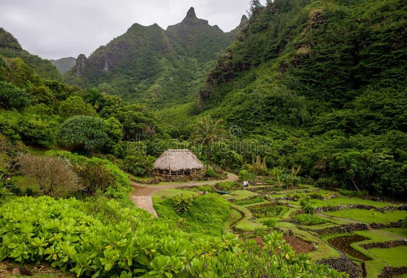 Limahuli Garden And Preserve, Kauai, Hawaii Editorial Stock Photo ...