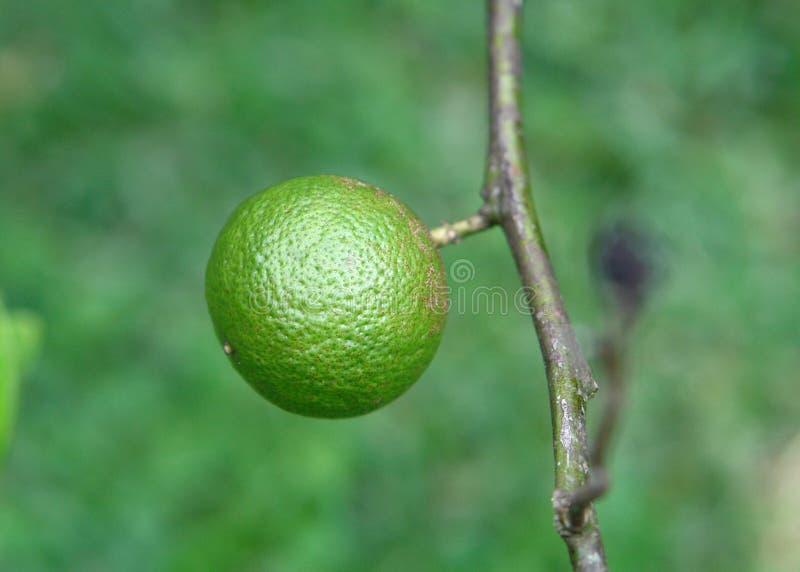 Download Lime stock photo. Image of caipirinha, juice, green, yellow - 1009452