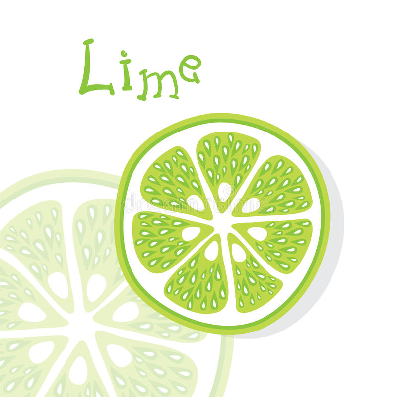 Lime citrus fruits vector. Drawing vitamins vector illustration
