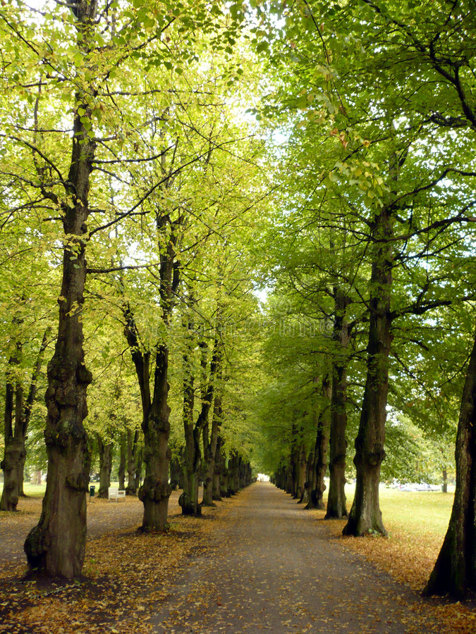 Lime green avenue royalty free stock image