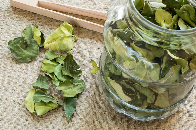 Lime leaves royalty free stock image