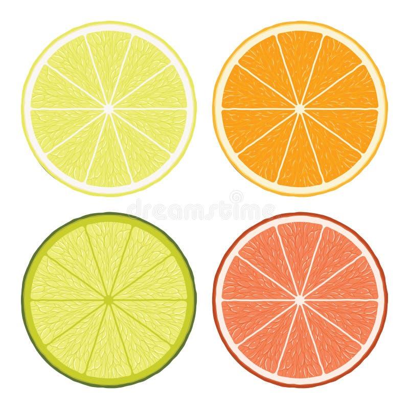 Lime, lemon, grapefruit and orange slices. vector royalty free illustration