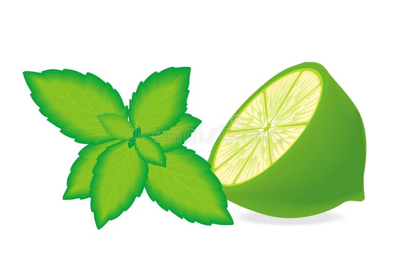 Download Lime and mint stock vector. Image of fruit, decoration - 17916086