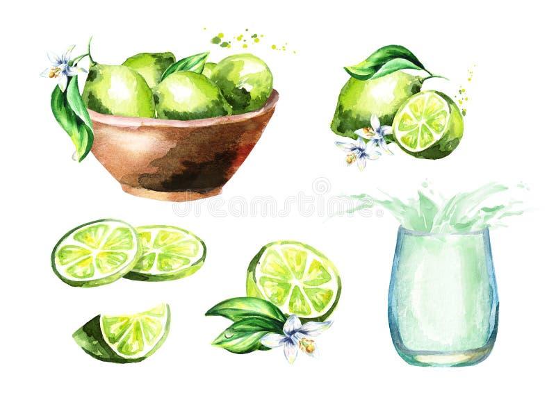 Lime set. Watercolor hand drawn illustration. vector illustration