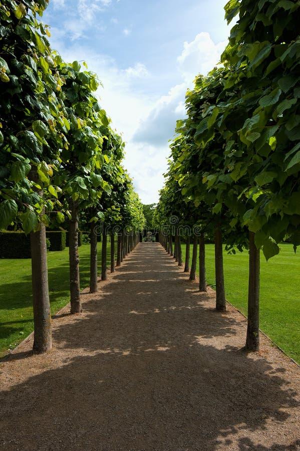Lime tree walk. At coughton court, warwickshire, UK stock image