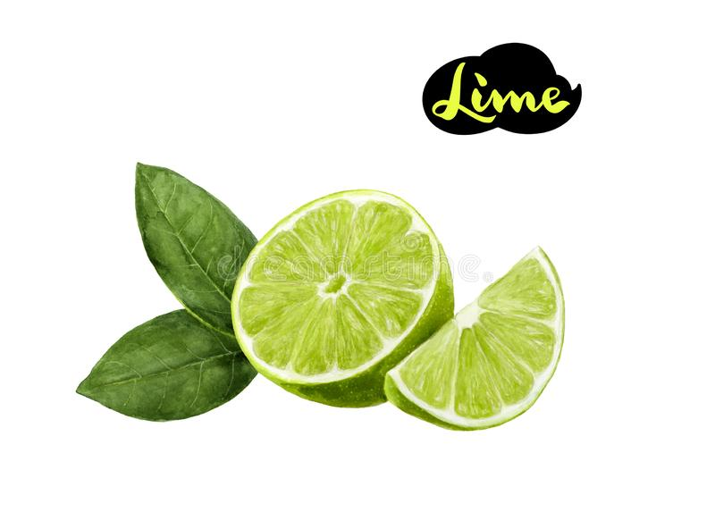 Lime watercolor hand draw illustration isolated on white royalty free illustration