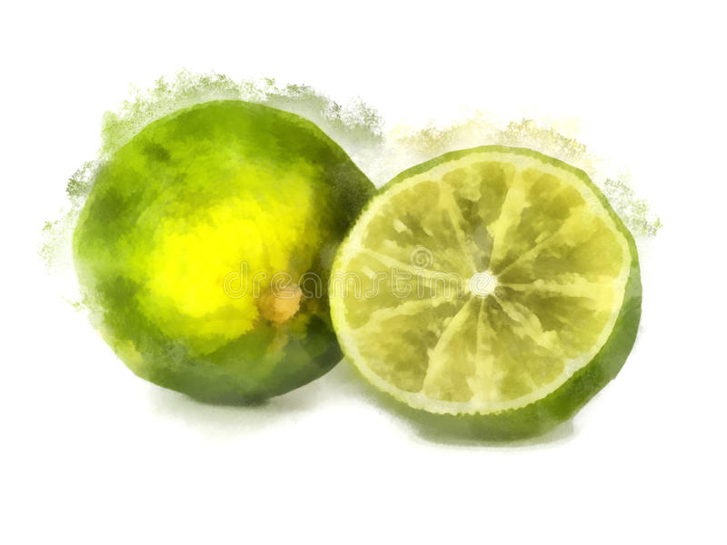 Lime watercolor painting royalty free stock images