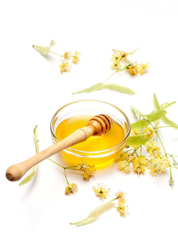 Limefrukt blommar med honung arkivfoto