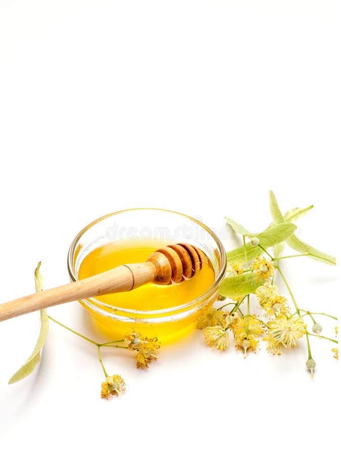 Limefrukt blommar med honung royaltyfri fotografi