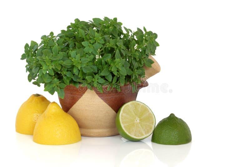 limefrukt för citron för basilikafruktört royaltyfri bild