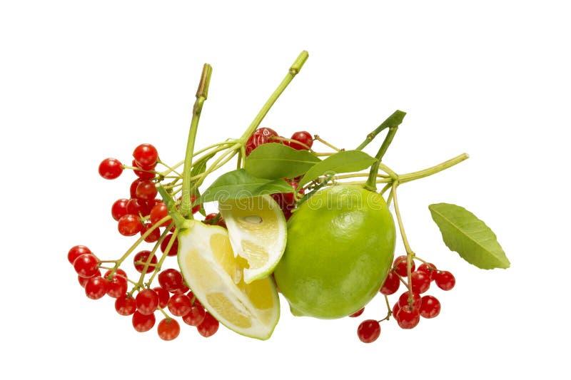 Limefrukt- och viburnumbär royaltyfria foton