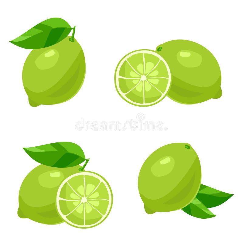 limefrukt vektor vektor illustrationer
