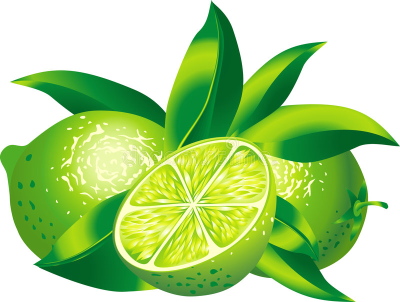Limes. Raster version of vector image of two limes There is in addition a vector format (EPS 8