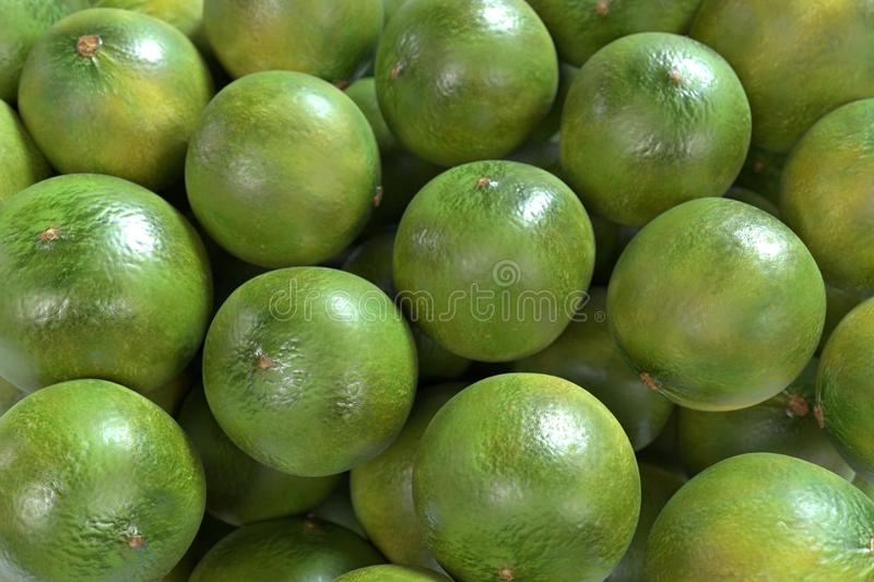 Limes. Realistic 3d render of limes vector illustration