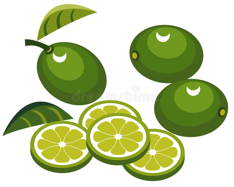 Download Limes with slices stock vector. Image of cartoon, healthy - 10757472