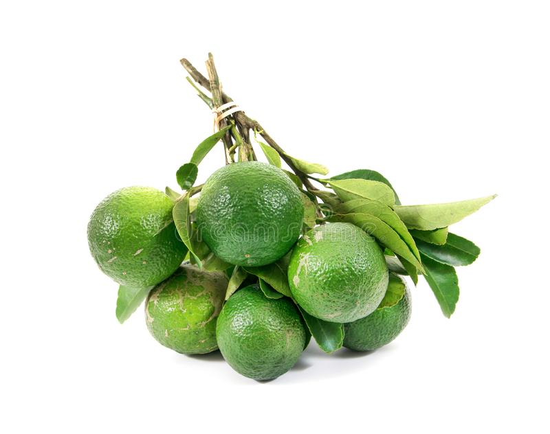 Bunch of limes whole with green leaves isolated on white background. Limes isolated royalty free stock photos