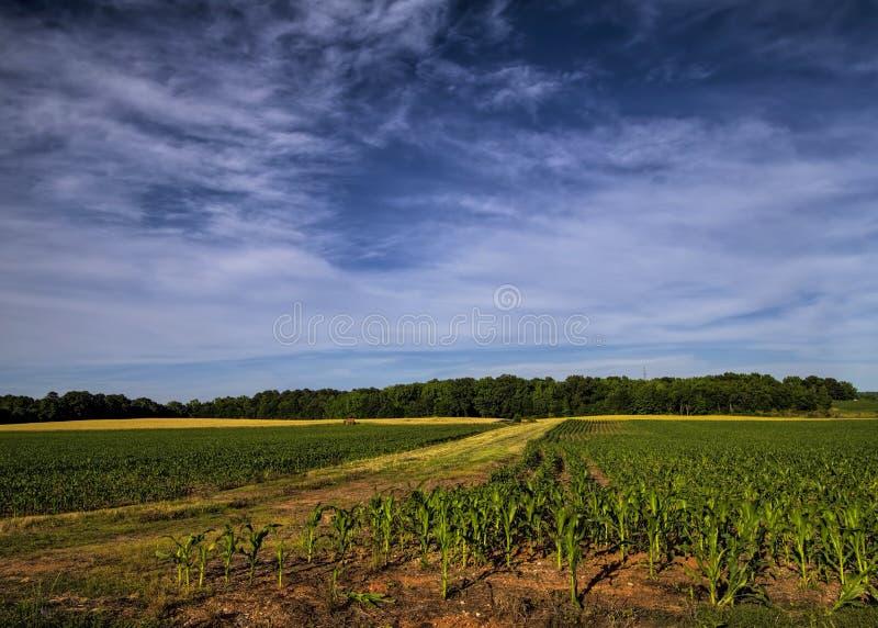 Limestone County Alabama havrefält arkivbilder
