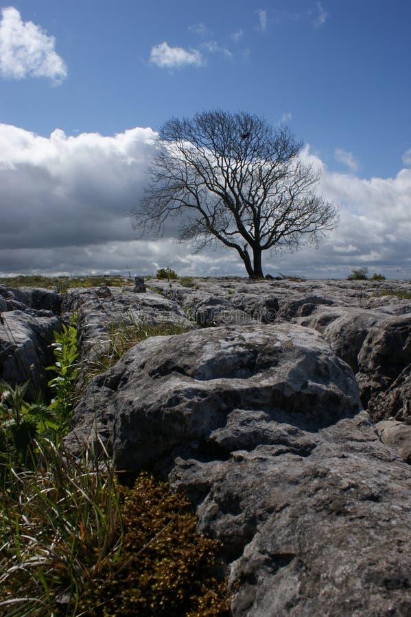 Limestone Landscape. Malham, Yorkshire, UK royalty free stock photo