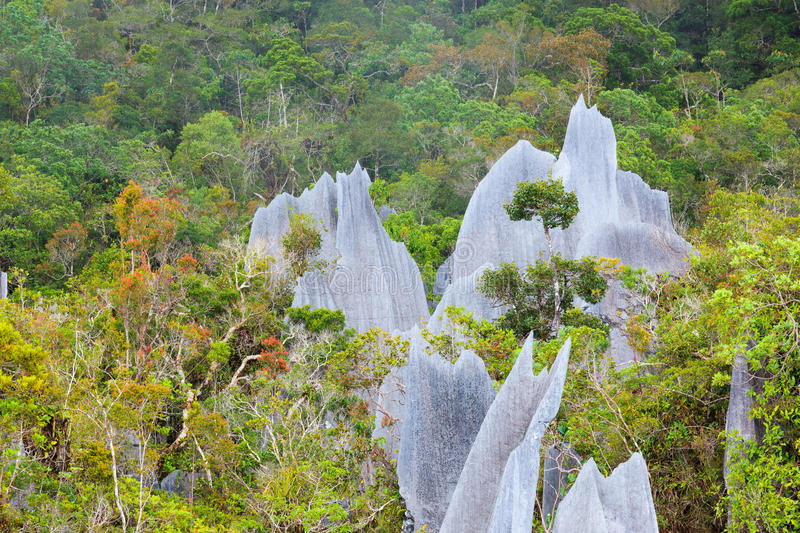 Download Limestone Pinnacles At Gunung Mulu National Park Stock Photo - Image of rainforest, attraction: 60337080