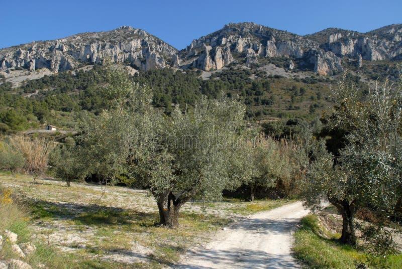 Limestone rock pinnacles, karst rock formation, Spain royalty free stock photos