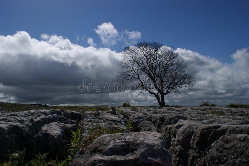 Limestone Tree Landscape. Limestone landscape, Malham, Yorkshire, UK stock photography