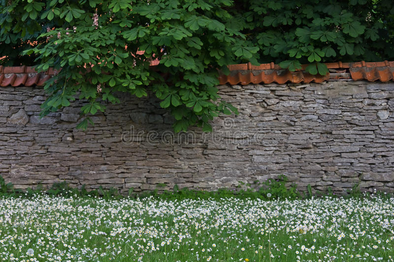 Limestone wall. Background photo with green grass, marguerite daisies, limestone wall and chestnut trees royalty free stock photos