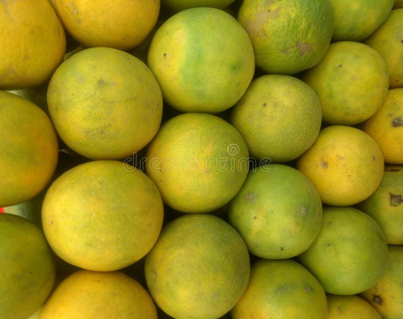 Limetta цитруса, альтернативно рассматриваемый, что быть сортом растения Citrus Limon, c ` Limetta ` limon, вид цитруса, обыкнове стоковая фотография