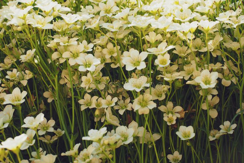 limitando a natureza delicada do tema do papel de parede das flores imagens de stock