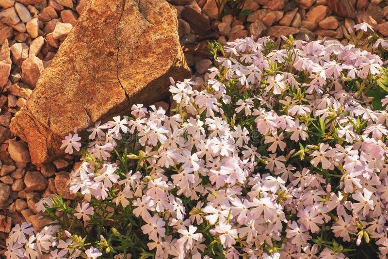 limitando a natureza delicada do tema do papel de parede das flores foto de stock royalty free