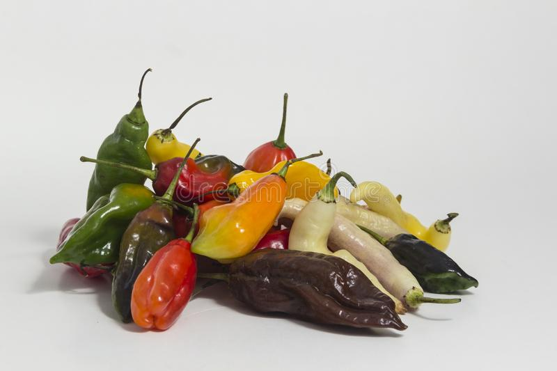 Limo chili still life - Set of different colors at the same plant. The Aji Limo is a strong chili that is used in Peruvian cuisine. As a seasoning for spicy royalty free stock images