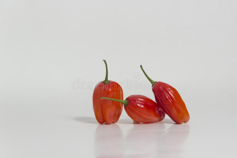 Limo chili still life - Set of different colors at the same plant. The Aji Limo is a strong chili that is used in Peruvian cuisine. As a seasoning for spicy royalty free stock photography