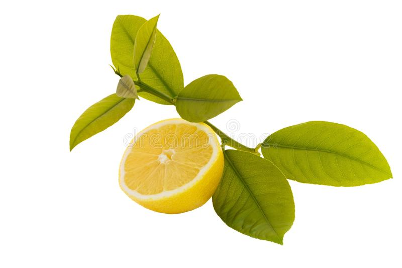 Limone affettato