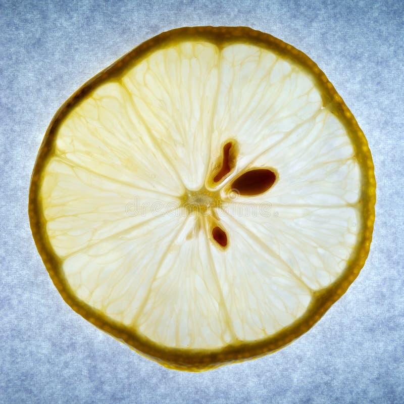 Limone all'indicatore luminoso fotografia stock libera da diritti
