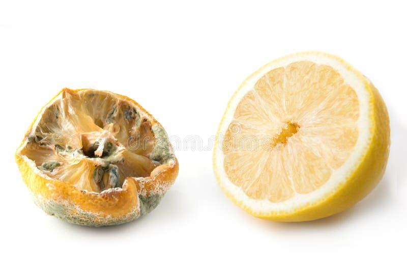 Limone brutto con la muffa e mezzo limone fresco su fondo bianco Fine in su fotografia stock