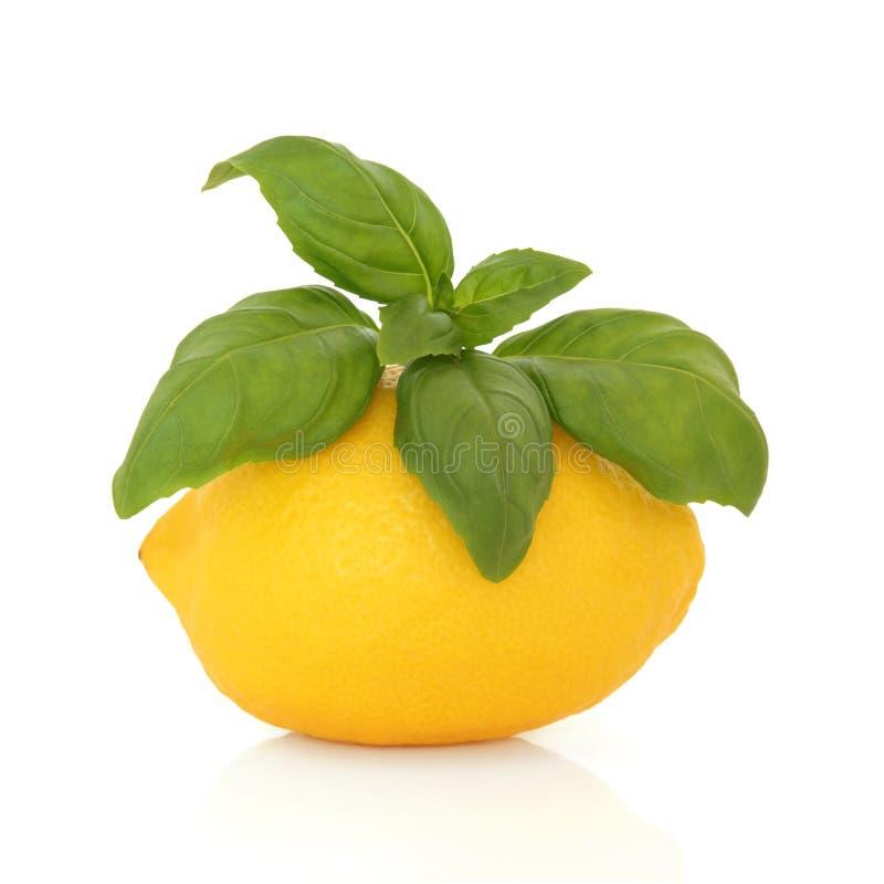 Limone e basilico fotografie stock
