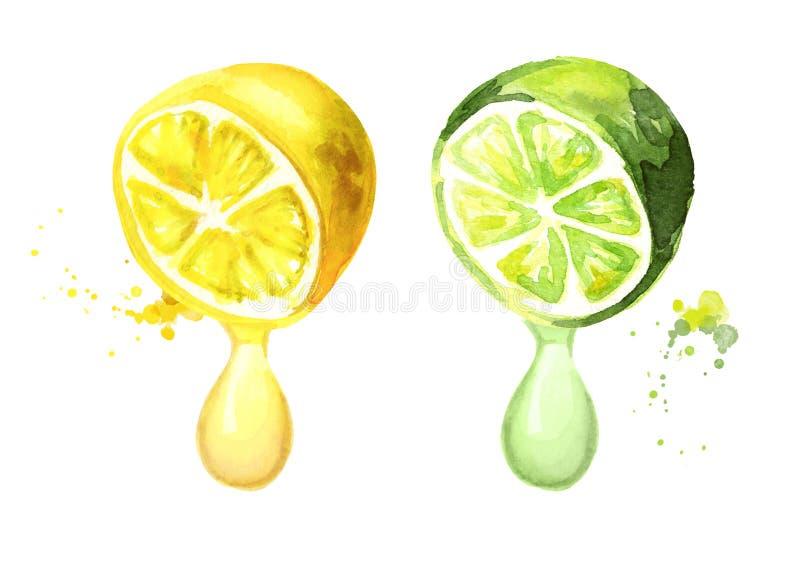 Limone e limetta con goccia del succo Illustrazione disegnata a mano dell'acquerello illustrazione di stock