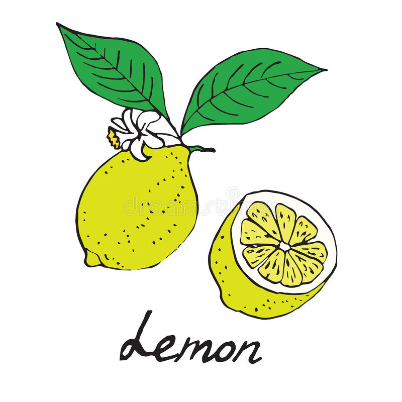 Limone e pezzo affettato illustrazione vettoriale