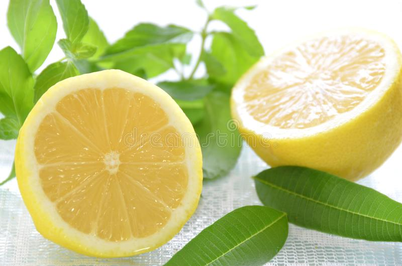 Limone ed erbe fotografia stock libera da diritti