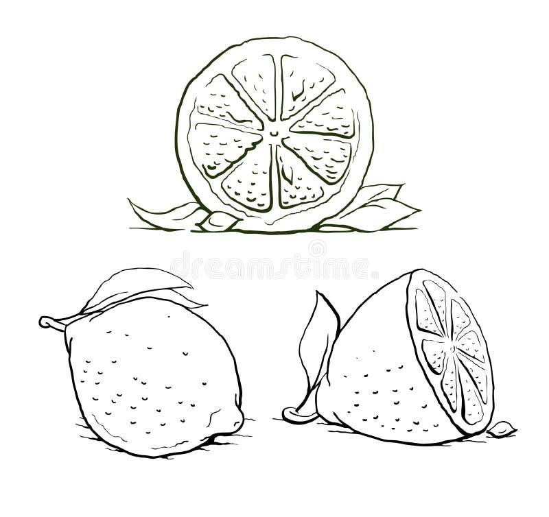 Limone maturo con il foglio. insieme dell'annata. royalty illustrazione gratis