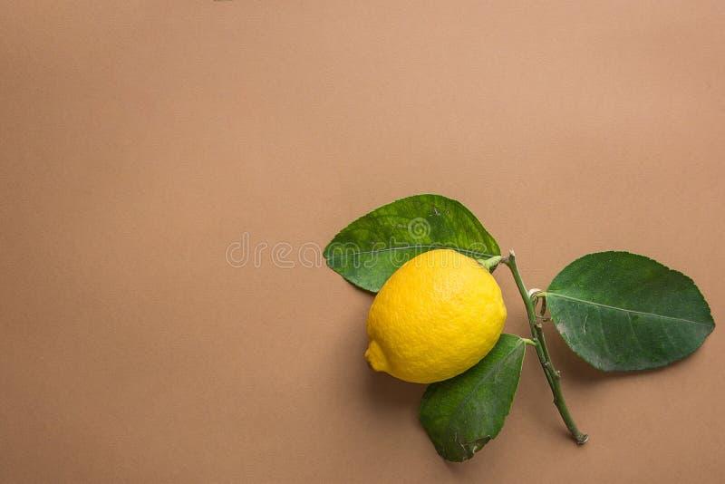 Limone organico maturo giallo luminoso sul ramo con le foglie verdi sul fondo beige di Brown Imperfezioni visibili Immagine creat fotografia stock libera da diritti