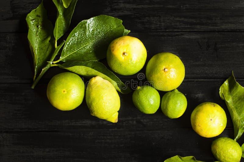Limone su una filiale con i fogli Priorità bassa nera Foto scura Frutta bagnata fotografie stock libere da diritti