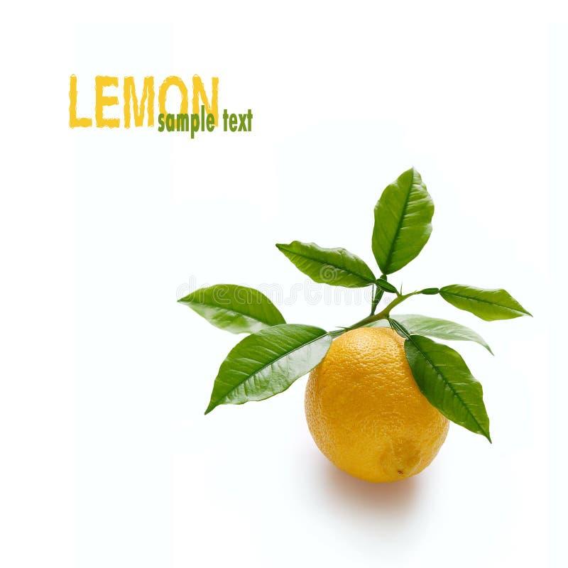 Limone sulla filiale immagine stock
