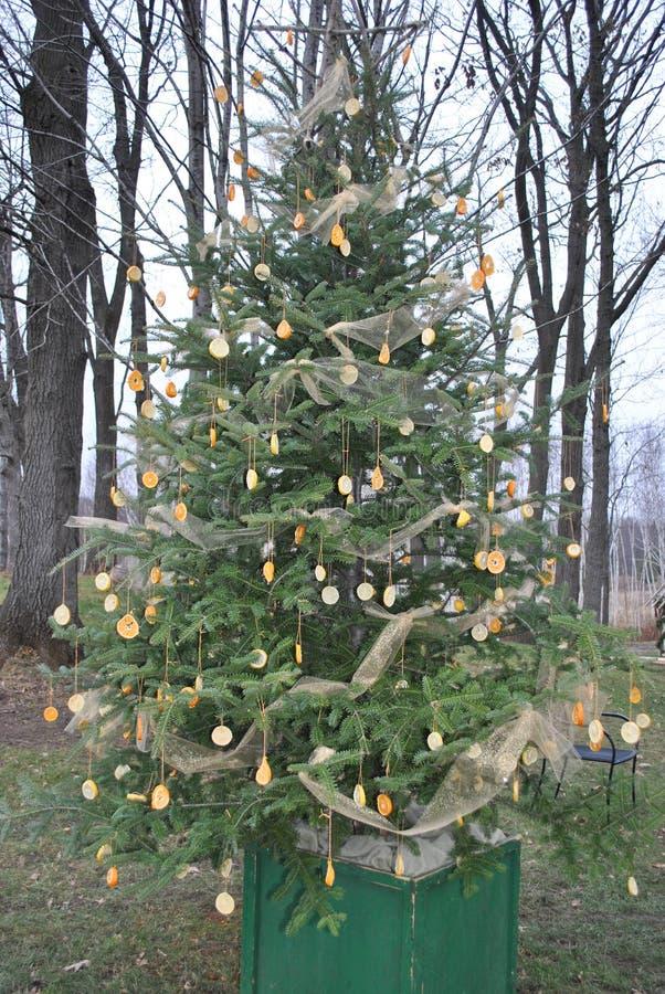 Limone unico ed albero di Natale arancio del pino fotografie stock libere da diritti